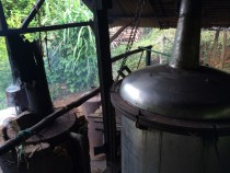 Distillerie Ambohimasao à Madagascar