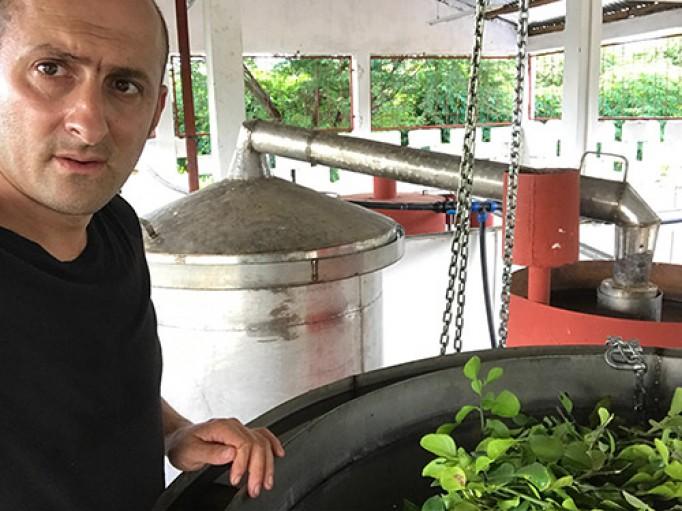 Distillation combava bio de Madagascar
