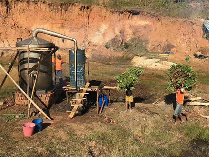 Geranium bourbon bio de Madagascar