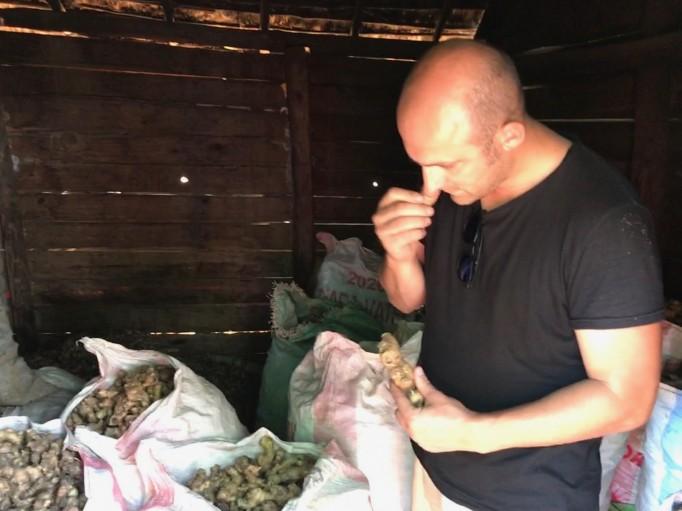 Stockage des rizhomes de Gingembre bleu en attente de les distiller