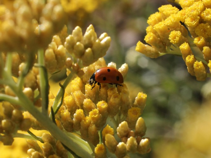 En culture Bio, on retrouve des coccinelles, des papillons, toute la biodiversité réapparait.