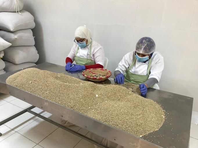 Le tri des graines de figue de barbarie Bio. Ces graines très très dures seront pressées ensuite pour donner une huile très précieuse.