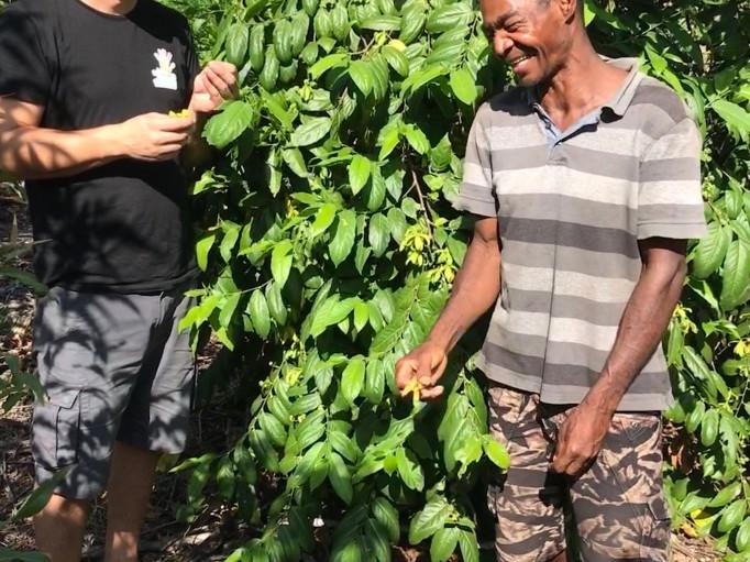 Notre plantation d'Ylang BIO commence à donner des fleurs