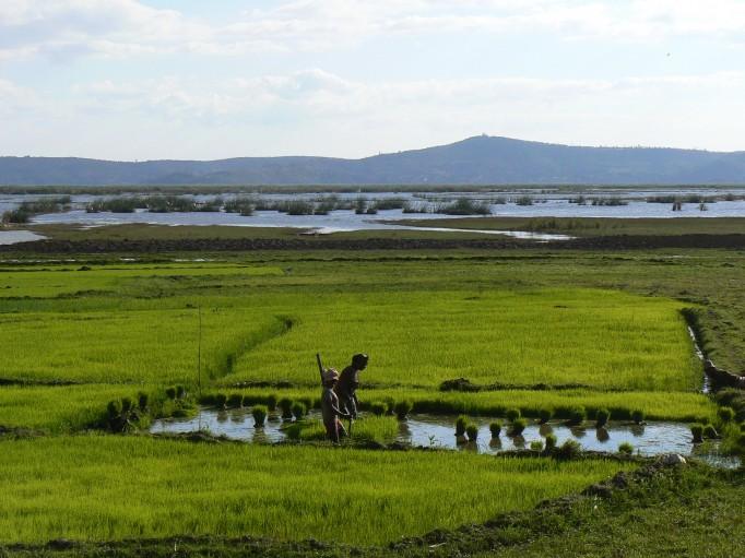 Cette région produit énormément de riz grace au lac Aloatra, le plus grand de Madagascar