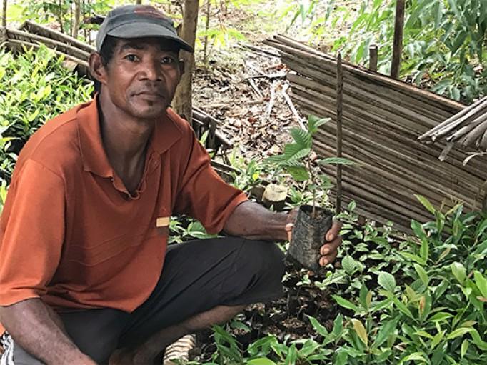Pépinière Ylang bio de Madagascar