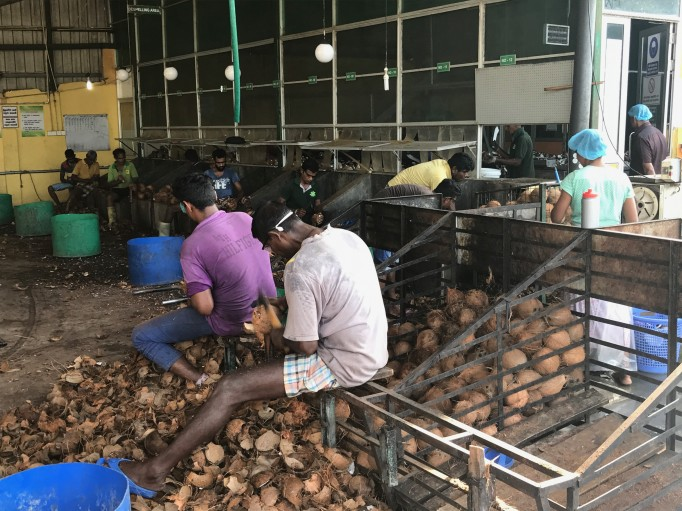 Ouverture des noix de coco pour sortir la pulpe en un tour de main, incroyable!
