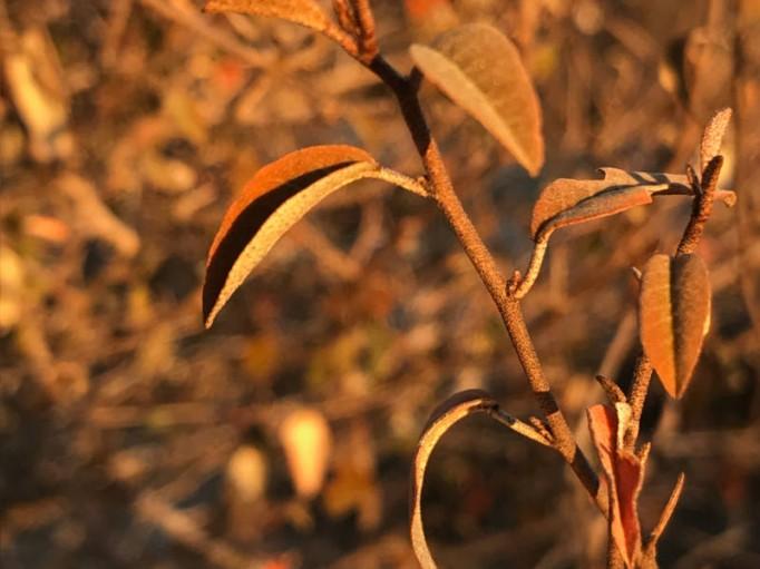 Somorombato bio de Madagascar